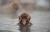 Snow Monkey (Clint Koehler) Tags: asia d700 japan jigokudaniyaenkoen 70200 jigokudani monkeypark monkey macaque hotspring winter nikon snow nagano