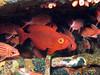 Squirlfish (Lerotic) Tags: uw underwater egypt redsea scuba diving