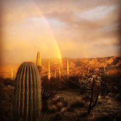 Amazing desert rainbow