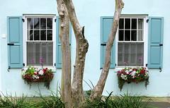 On Rainbow Row, 79-81 East Bay Street, Charleston, SC (Spencer Means) Tags: dwwg window wall rainbowrow charleston sc southcarolina street eastbay tree trunk crepemyrtle box plant flower