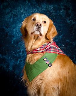 BZ Dog Scout