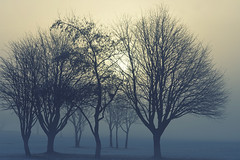 Mysterious morning (Edita Ruzgas. Thanks for your visit.) Tags: fog morning winter landscape nikon d7200 edita ruzgas outside goggy misty trees sunrise sun cold snow sweden sverige south southern skåne scandinavia nordic country silluete mistery misterious light blue yellow colours