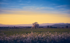 Lonely Tree (elgunto) Tags: sunset tree light colors nature field france countryside sonya7 elmaritr leica 9028