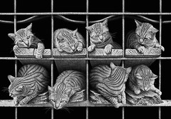 Get a canvas print of this photo I captured in Portugal http://bit.ly/2mSxNit #cats #benheinephotography #cute #octet #photography #chats #composition @icanvas_art (Ben Heine) Tags: benheinephotography photography composition light smartphone nature landscape beauty beautiful photo photographie art ifttt instagram benheine horizon