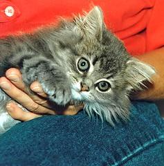 00347 (d_fust) Tags: cat kitten gato katze  macska gatto fust kedi  anak katt gatito kissa ktzchen gattino kucing   katje     yavrusu   skorpi