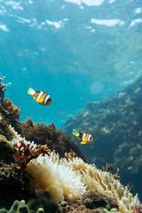 20150905-DSC_2433.jpg (d3_plus) Tags: sea sky fish beach japan 1 scenery underwater diving snorkeling  nikkor shizuoka   vr  apnea izu j4  waterproofcase    skindiving minamiizu f3556       nikon1 hirizo  1030mm  nakagi pdzoom 1  nikon1j4 1nikkorvr1030mmf3556pdzoom beachhirizo misakafishingport  1030mmpd nikonwpn3 wpn3
