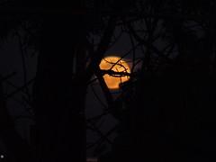 DSC00639 (VenilsonPereira) Tags: brazil sky moon tree brasil céu amarelo linda lua arvore yallow baetyful