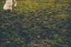 run (another side view) Tags: portrait woman art nature japan female digital 50mm artwork nikon df f14 sigma 日本 aso grassland 自然 artworks アート artline 阿蘇 女性 朝日 草千里 デジタル 牧草 naturepeople womanportrait ニコン ネイチャー シグマ 自然光 アートライン nikondf ニコンdf 自然と人