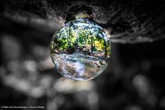 Forest in a ball (Mike van Houwelingen - DiverseMediaNL) Tags: sun sunlight nature glass ball globe natuur orb breda bol bos zon zondag zonlicht dorst glazen baronie glazenbol dmnat