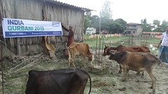 UWT in West Bengal 2015 (Ummah Welfare Trust) Tags: poverty charity india water islam eid wells mosque relief bengal masjid ummah qurbani
