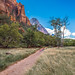 Grotto Trail, Zion National Park
