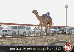 الشوط العاشر (الأول في عالم الهجن) Tags: فزاع دبي الناموس الهجن سباقات المرموم الناموسدوتكوم هجنالعاصفة