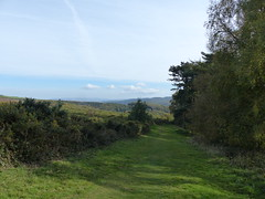 P1080651 (jrcollman) Tags: plants britishisles walk places exmoor selworthy pinusnigra betulapendula ulexgallii pplant bplant europeincldgcanaries selworthybeaconwalk