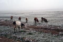 RU2012  (S.K. LO) Tags: russia easternsiberia irkutskregion