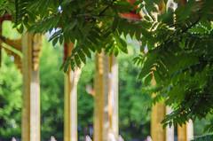 Leaves (izzieLiving) Tags: bokeh sommer westpark blätter pavillion helios blüten
