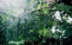 All the world was green. (diana.spatariu) Tags: green love nature rain pure ilovegreen moregreen alwaysgreen
