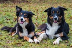 mom & son (Flemming Andersen) Tags: dogs hannah yatzy outdoor green grass border colli animal bordercolli hurupthy northdenmarkregion denmark dk mom son looking smilling
