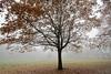 Tree of life (Mah Nava) Tags: treeoflife baumdeslebens tree herbst autumn nebel fog foggy neblig misty mist