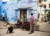 Streets of Jodhpur. (vjisin) Tags: rajasthan india iamnikon nikond3200 asia incredibleindia indianheritage travelphotography travel nikon streetphotography indianstreetphotography bluecity jodhpur layers dog love care