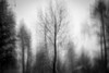 Through the Storm (SopheNic (DavidSenaPhoto)) Tags: impressionisticphotography trees intentionalcameramovement xe1 multipleexposure snowstorm snow fuji bw fujinon35mmf14 icm blackandwhite monochrome impressionism flickrfriday seethrough