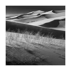 (Luminous☆West) Tags: sigma dp dp2 dp2m merrill foveon landscape great sand dunes colorado black white blackwhite blackandwhite monochrome bw sdim0961 luminouswest luminous west sigmamerrill x3f