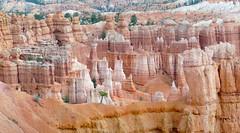 Hoodoos. Bryces Canyon Utah. (Bernard Spragg) Tags: hoodoosbrycecanyon nationalparksusa lumixfz1000 landscapes nature scenety utah usa travel