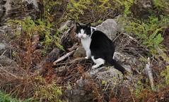 River cat (slim_fury) Tags: mississippiriver minnesota fallfoliage cat lakecity lakepepin