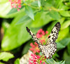 like a colorful dream (Danyel B. Photography) Tags: colorful farbig farben dream traum bokeh extreme macro close nah natur nature schmetterling butterfly