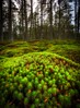 Forest Within a Forest (Augmented Reality Images (Getty Contributor)) Tags: bracketedexposure canon focusstack forest green hdr landscape leefilters longexposure moss nature perthshire scotland trees winter