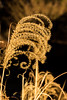 Swirl (O.S. Fisher) Tags: 5d arkansas canon canon5dmarkiii markiii osfisher olivershaunfisher photo black photograph photography plant shaunfisher spiral swirl yellow