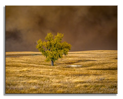Prairie Fire Approaching_ (Mark Darnell) Tags: sdakota event prarie