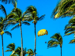 up up & away (-gregg-) Tags: sky blue yellow parasailing palm trees bahamas nassau atlantis