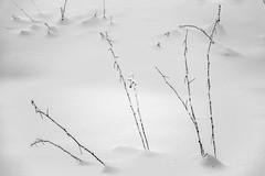 Time to dream (PaxaMik) Tags: snow winter hiver neige pure pureté calme épure solitude noiretblanc n§b