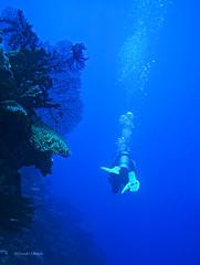 Diving in Mamanuca Islands (kyshokada) Tags: fiji mamanucaislands mamanuca scuba diver pacific underwater corals reef