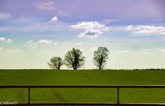 Balade aux champs. (Crilion43) Tags: arbres france véreaux divers réflex ciel champ nature paysage objectif centre nuages canon herbe tamron 1200d cher maison pré sapin thuya