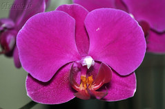 5 Flower (GFerreiraJr ) Tags: flowers brazil flores flower brasil nikon orchids flor sp orqudeas gettyimages nationalgeographic d90 santoandr micmarayyo nikond90 flickraward santoandrsp nikonflickraward panoramafotogrfico touraroundtheworld flickrunitedaward brasilemimagens gferreirajr