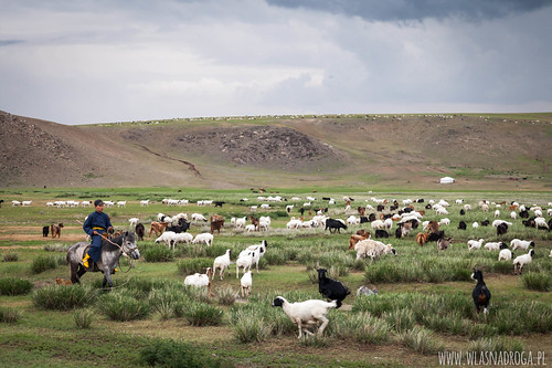Pasterz