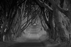 dark hedges (plot19) Tags: road uk trees ireland blackandwhite white black tree dark photography blackwhite nikon mood moody northwest britain north lane northern hedges plot19