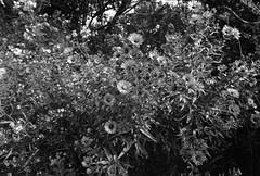 Fujifilm/500px Global Photowalk Day (.:Axle:.) Tags: bw ontario canada slr film nature water 35mm blackwhite nikon kodak trix trails hc110 hike falls trail waterfalls 400 photowalk 135 milton f5 hiltonfalls asa400 conservationarea filmphotography nikonf5 kodaktrix400 dilutionb filmisalive afsnikkor1424mm128g globalphotowalk believeinfilm 500pxgpw