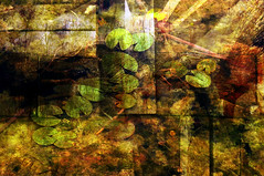 stilleven (roberke) Tags: plants water colors photoshop colorfull textures photomontage layers conceptual lagen