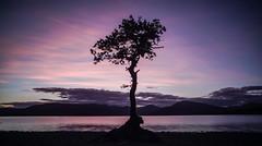 That tree......(again) (Caledonia84) Tags: sunset scotland sony lochlomond lonetree millarochy a6000