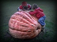 400 kg... (sermatimati) Tags: show park new trees light shadow hot color art ice beautiful rain fruit architecture alberi garden giant nude pumpkin outdoors design nikon break play darkness gardening good nursery ombra lawn vegetable smartphone gourd photograph huge fotografia fiori visitors gigantic incredible piante horticulture pioggia architettura colossal immense luce coffins boiling zucca cernobbio gioco installations selfie enorme frutti novit varieties giocare cyclopean floriculture cultivar disproportionate allestimenti 400kg coltivare sermatimati ancientspecies oldvarieties