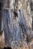 November light (long.fanger) Tags: wood texture stump