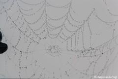 Pearls (LadyLove1967) Tags: mist water licht bomen vogels spinnenwebben donker koeien bankje zicht warmond leegte geenzicht