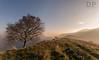 Happy Trees (Daniele Pauletto) Tags: trees light sunset italy sun alberi tramonto hill bobross luce colline happytree sormano dpphotography lacolma