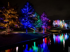 Vitruvian Lights 2015-3 (MikeyBNguyen) Tags: us texas unitedstates christmastree christmaslights christmastrees addison vitruvianpark vitruvianlights