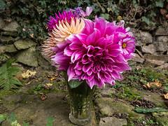 Dahlias (Elise Swart) Tags: dahlia flowers france flower fleur fleurs flowering bouquet frankrijk fr bloemen lafrance bloem vaas cosmea boeket bloei verbenabonariensis ldf bloeien