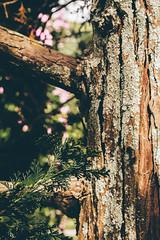 #61 of 365 days - n a t u r e (Ruadh Sionnach) Tags: ranch camera naturaleza detail macro tree verde green folhas nature grass leaves canon photography leaf plantas natural zoom details natureza folha fazenda t5i canont5i