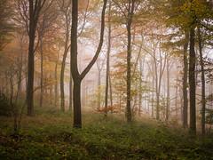 Silence (Damian_Ward) Tags: wood morning autumn trees mist fall misty fog forest woodland photography chilterns buckinghamshire foggy bucks autumnal beech wendover astonhill thechilterns chilternhills wendoverwoods damianward ©damianward
