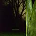 151210-wood-trees-park-night.jpg